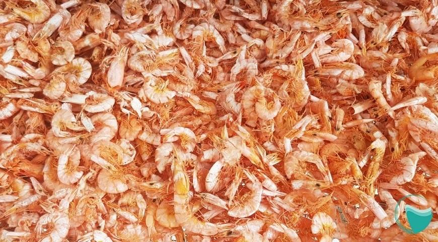 Máy sấy hải sản Hai Tấn – Giải pháp cho ngành sản xuất Tôm khô, cá khô