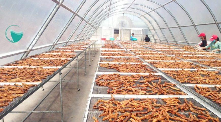 Nhà máy trái cây sấy khô và 1 số yếu tố quyết định thành công
