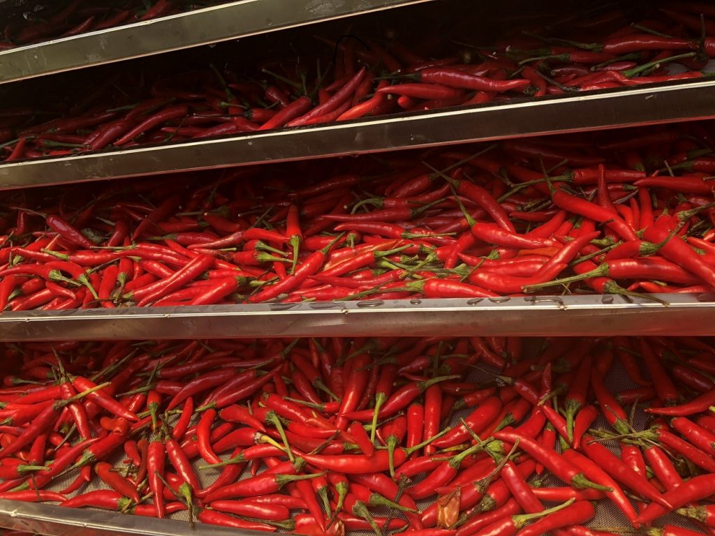 Lựa chọn nguyên liệu ớt tươi, có màu đỏ đều