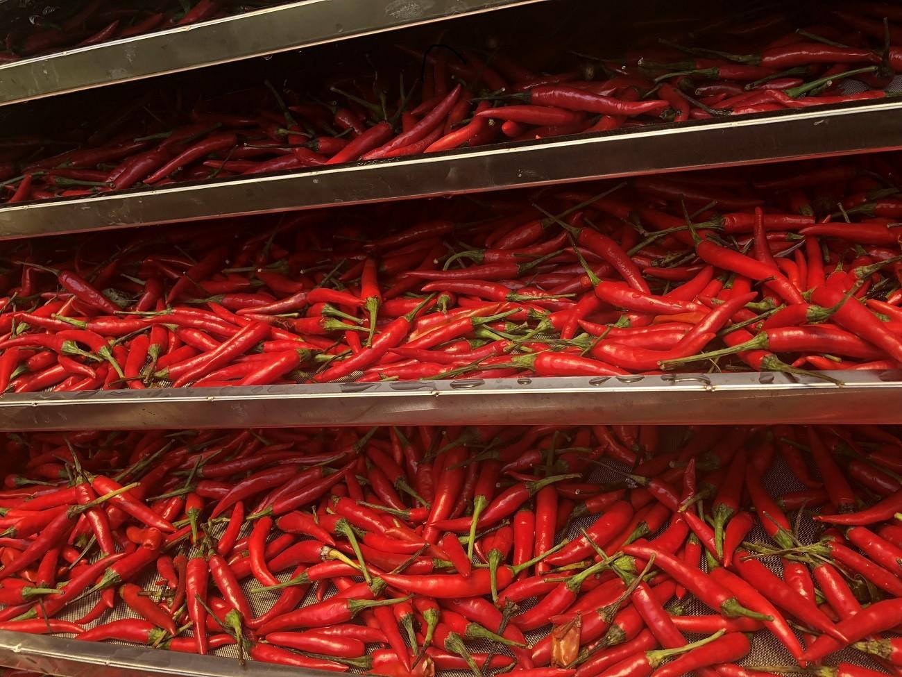Máy sấy ớt – Quy trình sản xuất ớt sấy khô bằng máy sấy ớt 2020