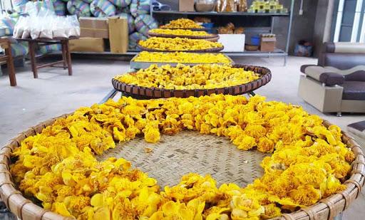 Máy sấy chè hoa vàng